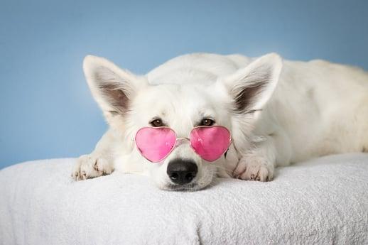 adorable-animal-canine-2607544