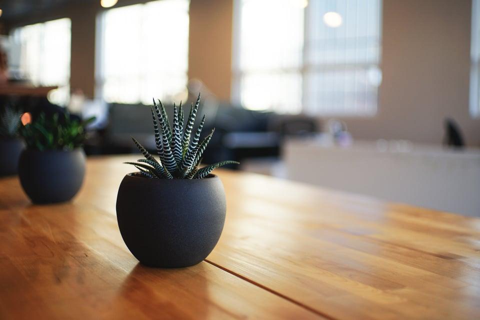 office-plants-alvin-engler.jpg